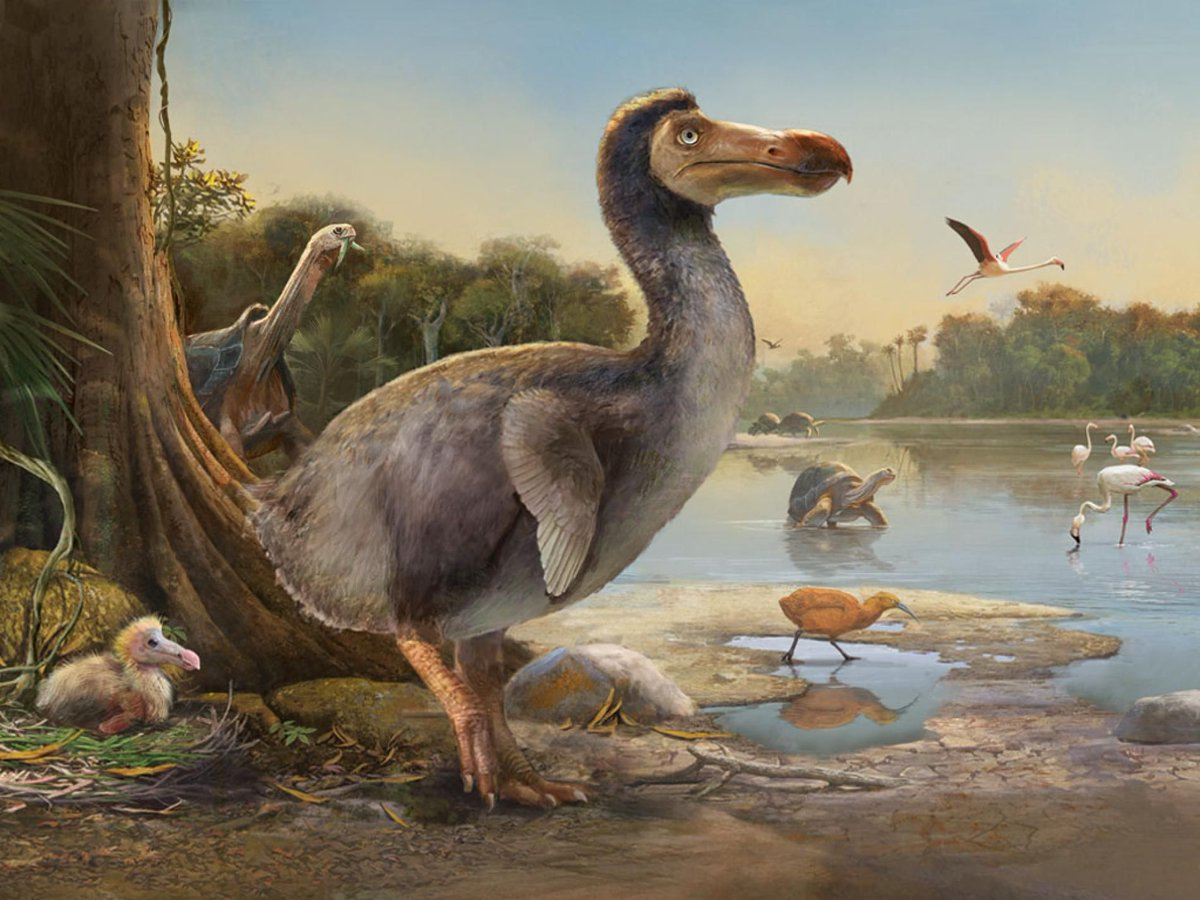 Đây là loài động vật đầu tiên bị con người tận diệt đến tuyệt chủng - 1