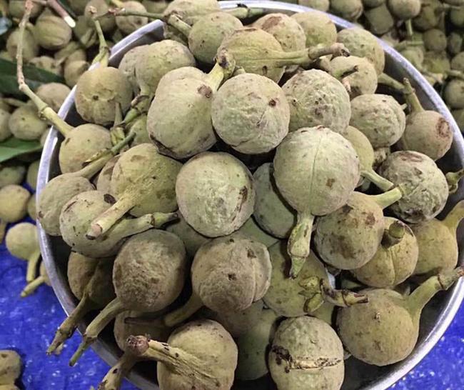 Đây là một loại quả rừng quen thuộc với người dân ở Điện Biên, Sơn La nhưng vẫn còn mới lạ với người dân thành phố.
