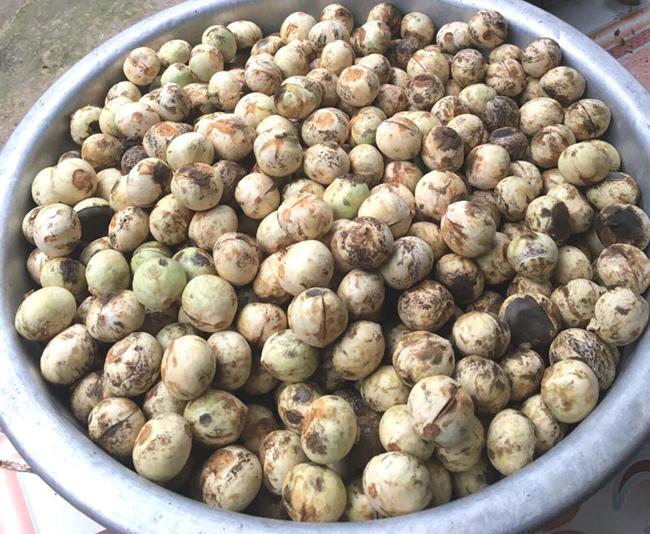 Ở Điện Biên, Sơn La, 1kg mắc ten nguyên vỏ xanh giá 50.000 đồng, về đến Hà Nội giá thành sẽ đội lên khá cao do chí phí vận chuyển.