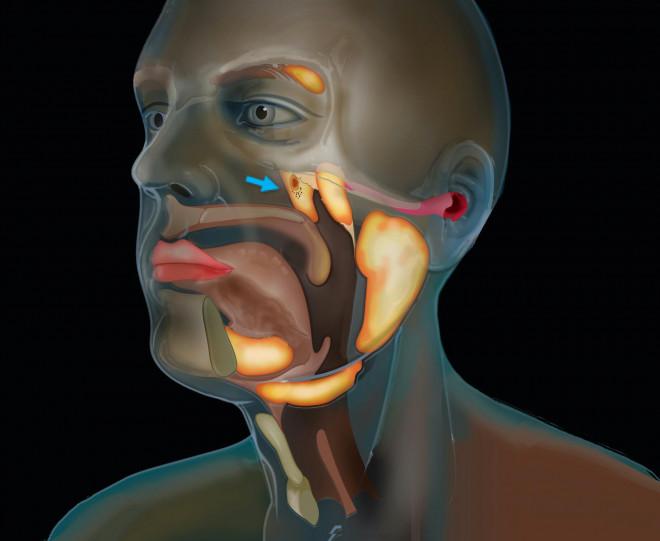 Phát hiện cơ quan chưa từng biết trong cơ thể người, giúp chữa ung thư an toàn - 1