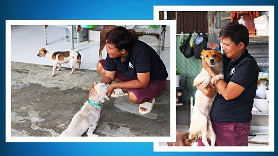 Người phụ nữ nguyện cả đời cứu giúp chó mèo hoang - 1