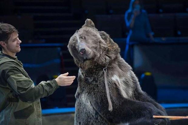 Nga: Quên tháo khẩu trang khi vào chuồng gấu cưng và cái kết thảm khốc - 1