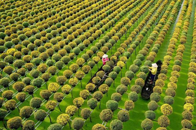Sắc màu làng hoa Sa Đéc - 1