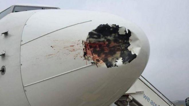 Chim va móp cả động cơ máy bay - 1
