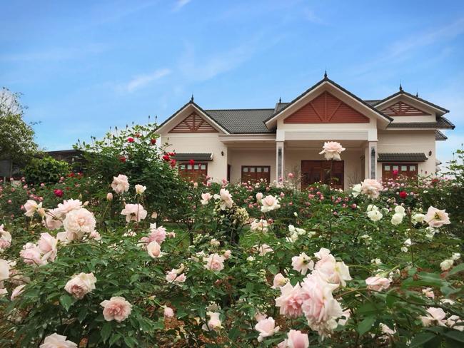Chị Ánh Quyên ở Cẩm Lĩnh (Ba Vì, Hà Nội) có tình yêu với hoa hồng từ khi còn rất nhỏ. Đến năm 2016, chị mới thực hiện được ước mơ của mình.