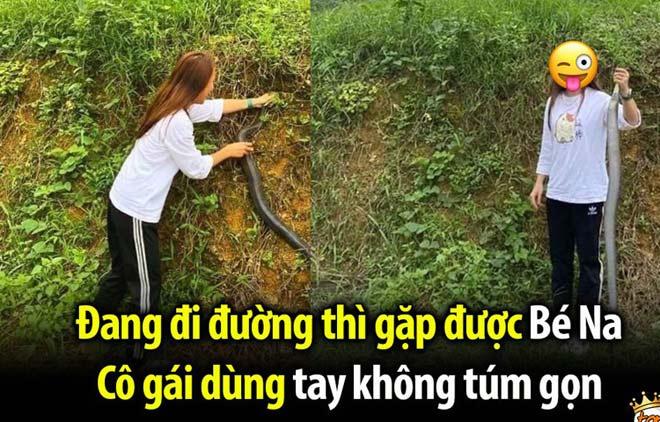 """Gái xinh Nghệ An tay không bắt rắn hổ mang khiến dân mạng """"toát mồ hôi"""" - 1"""
