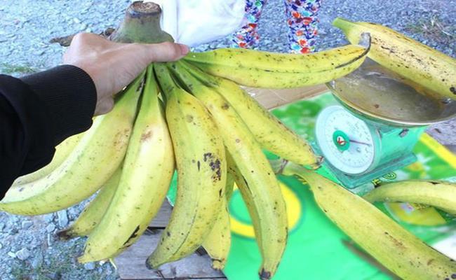 Một cửa hàng đặc sản ở TP.HCM từng bán giống chuối khổng lồ này với giá 20.000 đồng/1 quả.