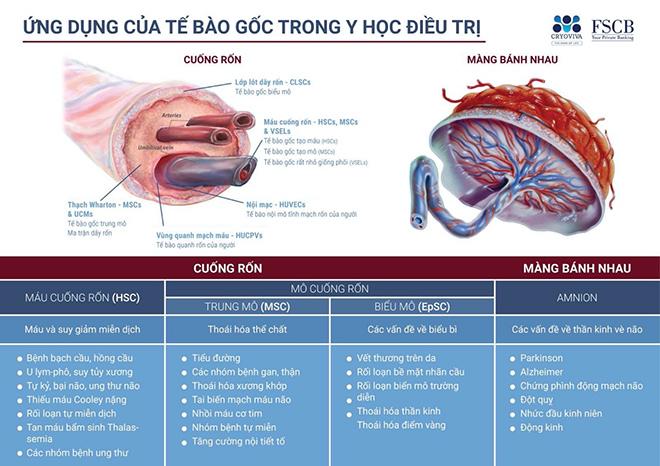 Dàn sao Việt đồng loạt lưu trữ tế bào gốc cho con - 1