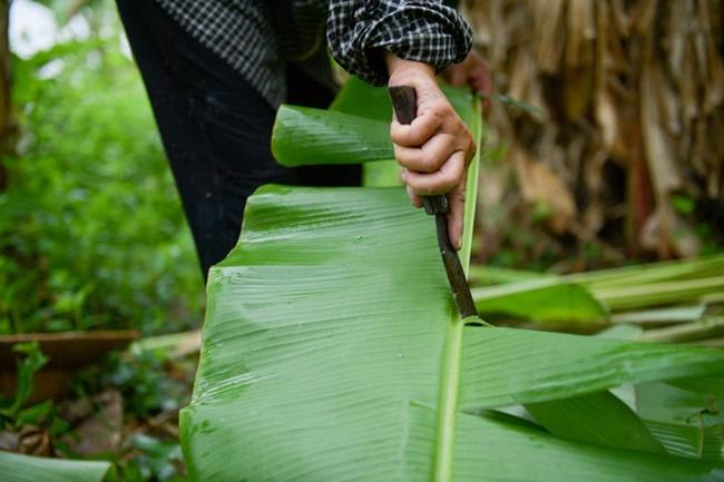 Cây chuối không có gì xa lạ với mọi người đặc biệt là ở vùng nông thôn. Trước đây, lá chuối chỉ được dùng trong nhà khi có việc cần, còn hiện nay lá chuối đã được bán ra thị trường.