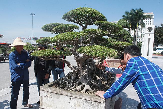 """Theo chủ nhân tác phẩm, cây có nguồn gốc từ làng Triều Khúc (một làng làm cây nghệ thuật nổi tiếng của Hà Nội). Năm 1990 cây được bán với giá 7 triệu đồng. """"Nếu tính ra vàng bây giờ phải mua được mấy căn nhà mặt phố"""", anh Hưởng nói."""