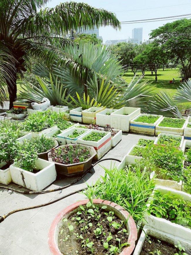 Với không gian rộng, Bảo Thy còn dành cả khu sân thượng để làm vườn rau sạch do chính tay cô tự trồng và chăm sóc.