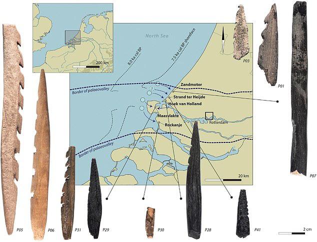 Bí ẩn hài cốt người 7.500 tuổi đầy răng cưa dạt vào bờ biển - 1