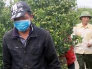 Hà Nội: Những vườn quất Tứ Liên tiền tỷ nhộn nhịp trước Tết