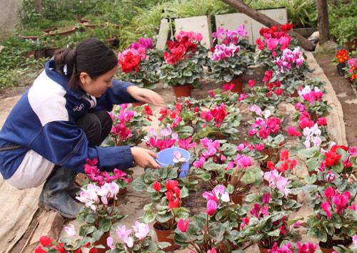 Khu vườn xuân của sinh viên Nông nghiệp - 1